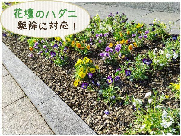 花壇のハダニ駆除に対応