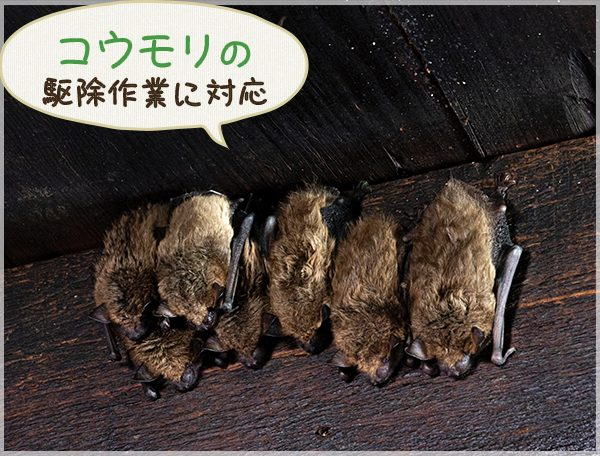 コウモリの駆除作業に対応