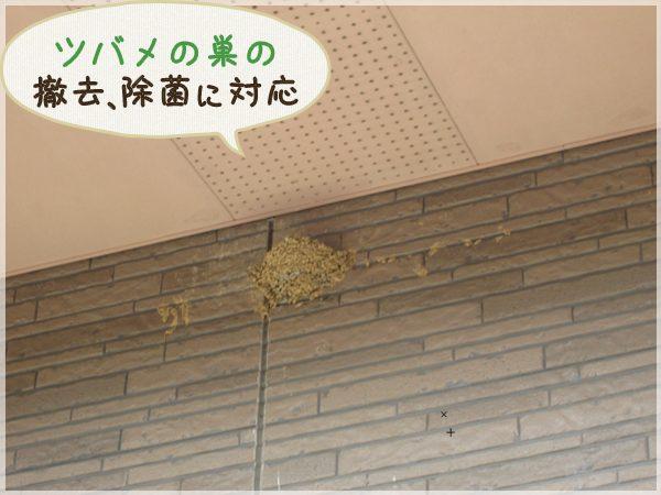 撤去前のツバメの巣